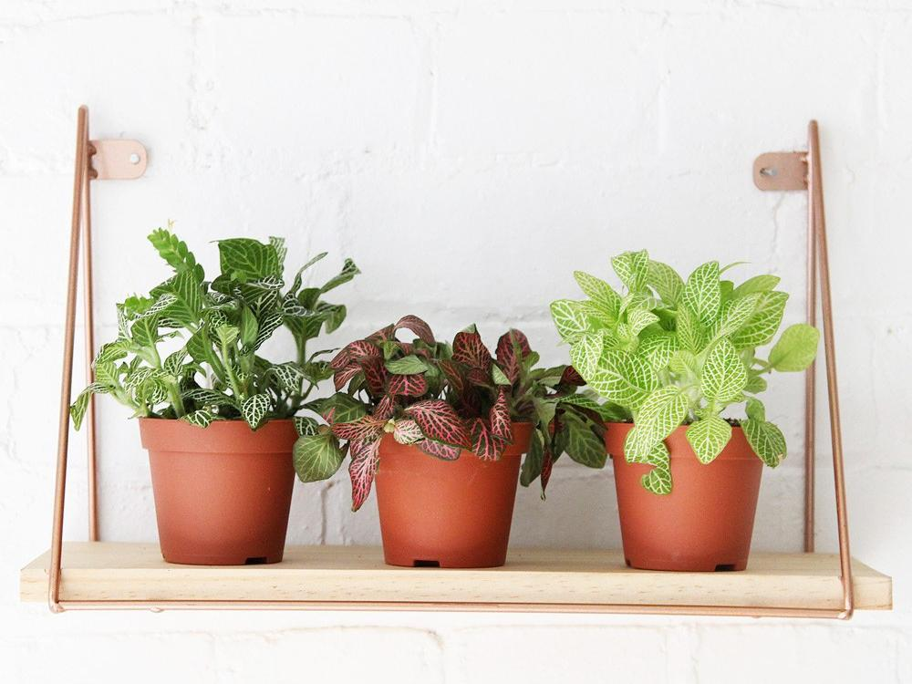 8 best house plants, hanging planters and terrariums   The Independent