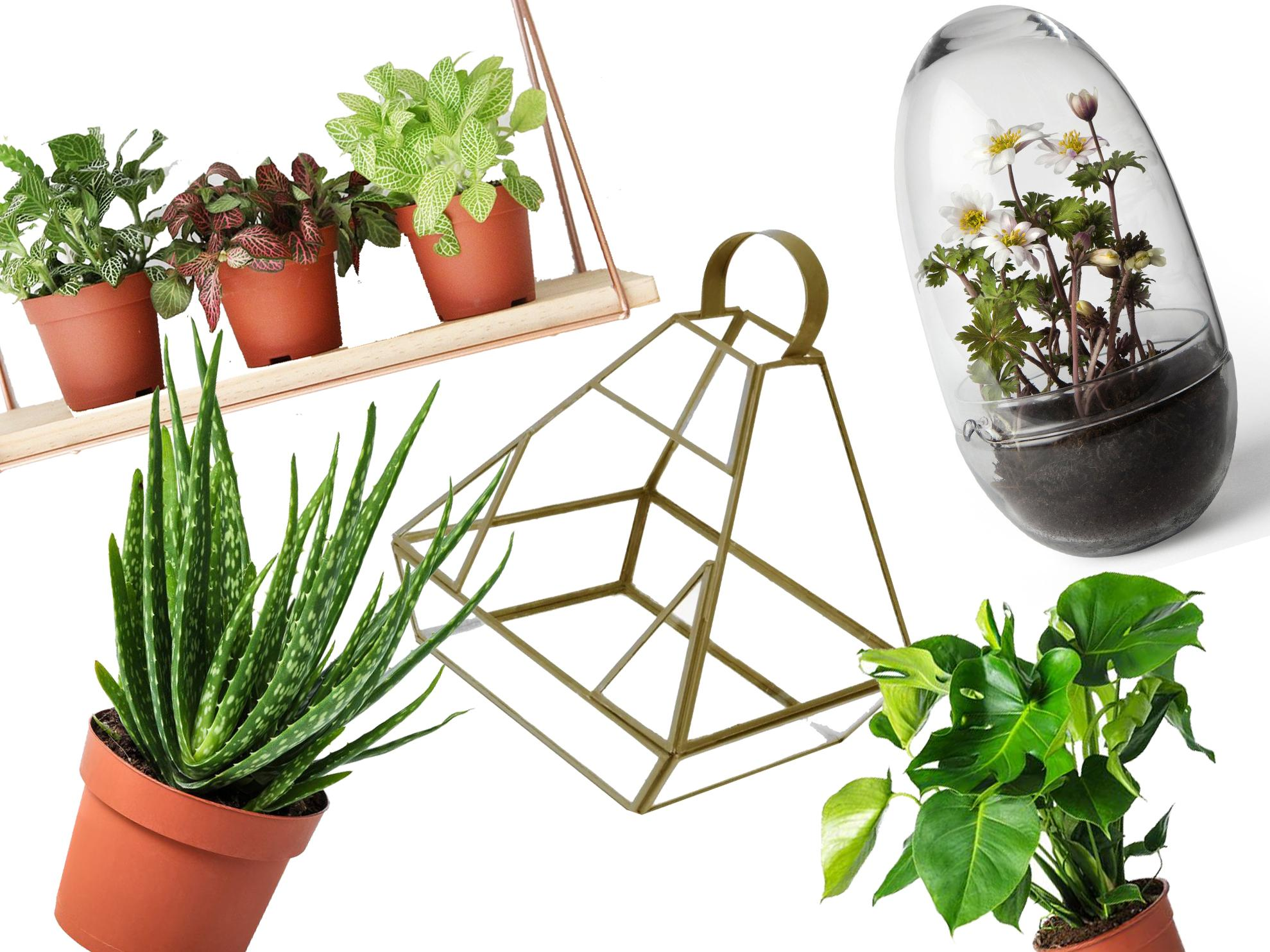 8 best house plants, hanging planters and terrariums | The ... Ice Front House Plants on sword house plant, avocado house plant, marijuana house plant, steel house plant, banana house plant, jade house plant, leaf house plant, lazarus house plant, ant house plant, lemon house plant, dolphin house plant,