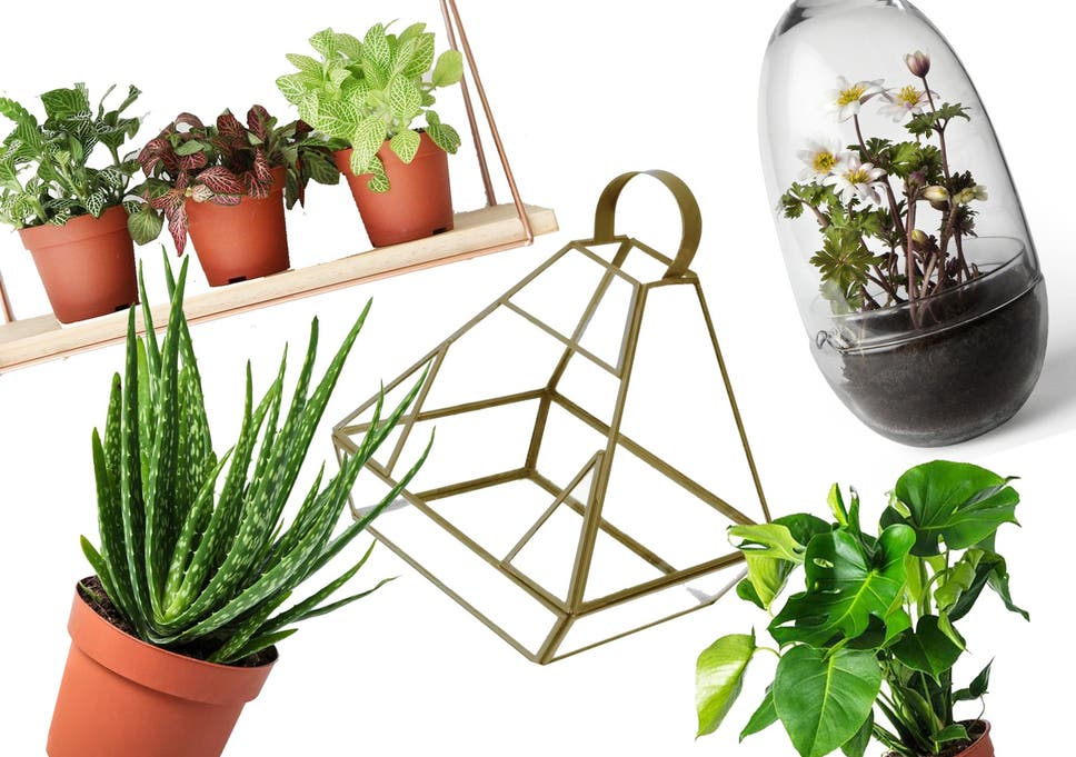 8 best house plants, hanging planters and terrariums | The ... Long Lasting House Plants on colorful house plants, non-toxic house plants, small house plants, soothing house plants, robust house plants, weather proof house plants, hypoallergenic house plants, fragrant house plants, lightweight house plants, compact house plants, organic house plants, portable house plants, rugged house plants, elegant house plants, night blooming house plants, refreshing house plants, cool looking house plants, inexpensive house plants, strong house plants, easy to maintain house plants,