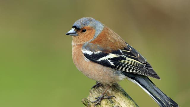 Down one place on last year.  Birdwatch has released this year's rankings for the most frequently spotted birds in the UK. Results were collected from 420,489 British birdspotters