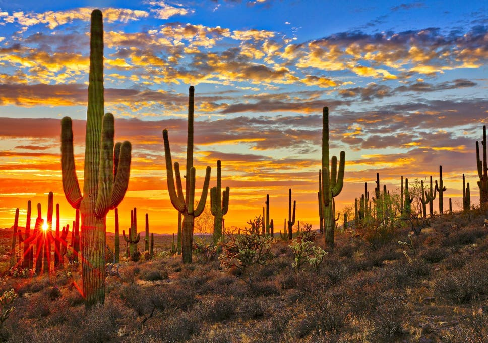 Image result for arizona""