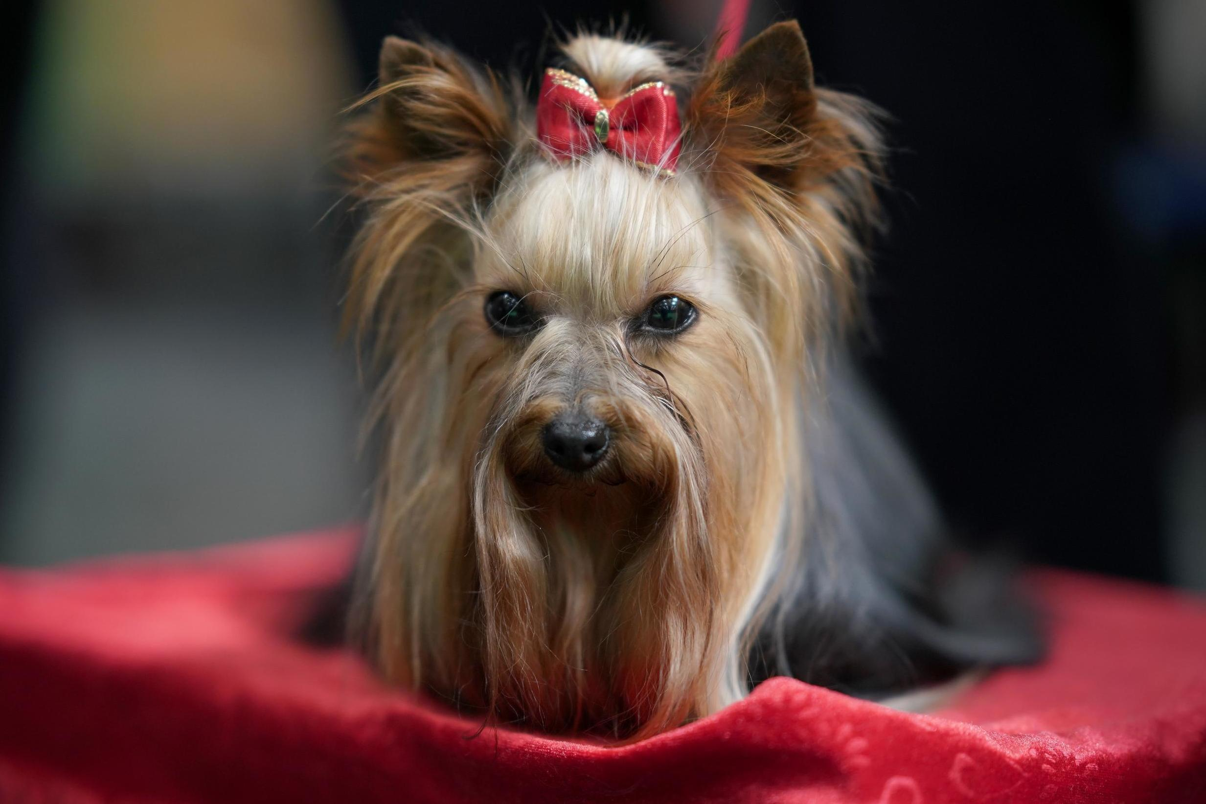 Crufts 2019: Dog owners show their pets watching the competition