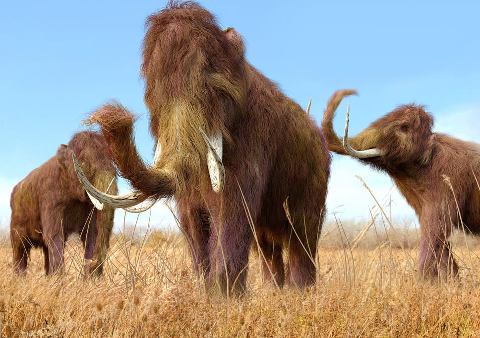 Woolly mammoths: Japanese scientists take 'significant step' towards bringing prehistoric giants back to life