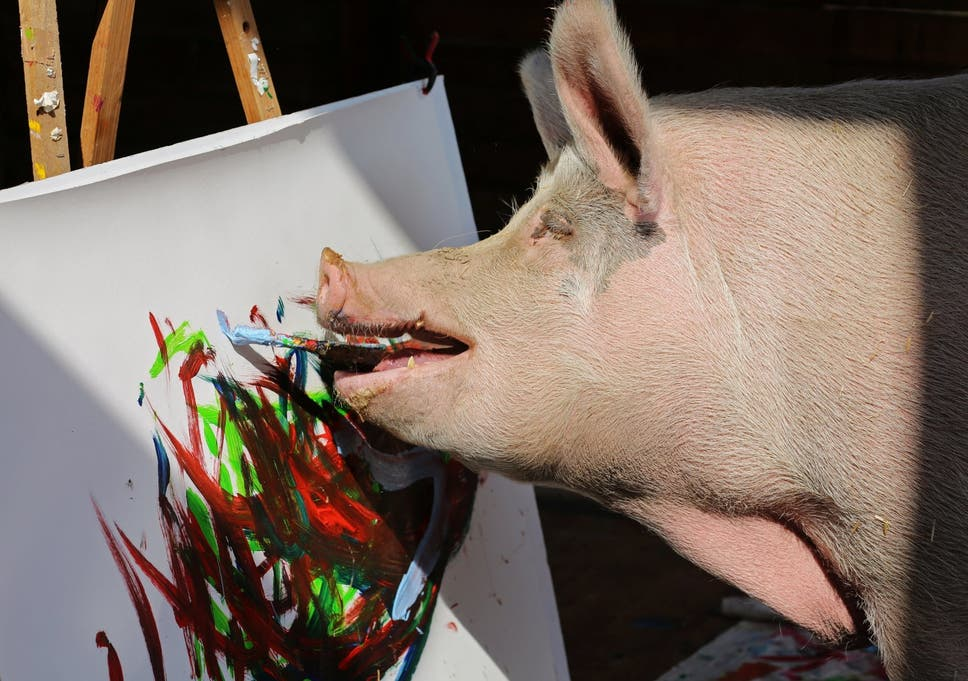 Pigcasso the painting pig's artwork sells for thousands | The