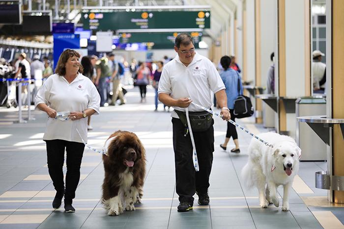 Therapy dogs at Vancouver International Airport