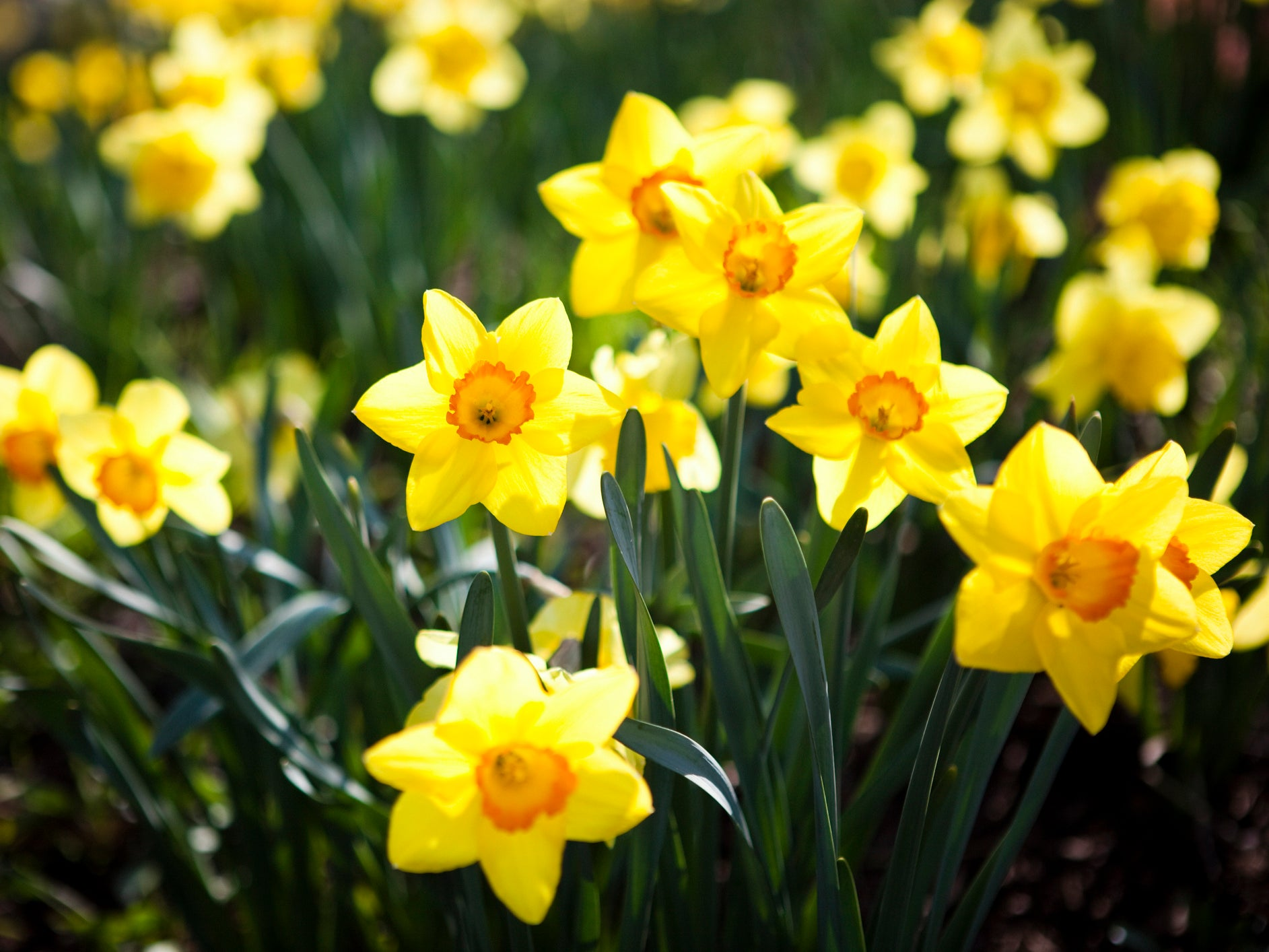 Spring equinox 2019: What is it and how is it connected to ...