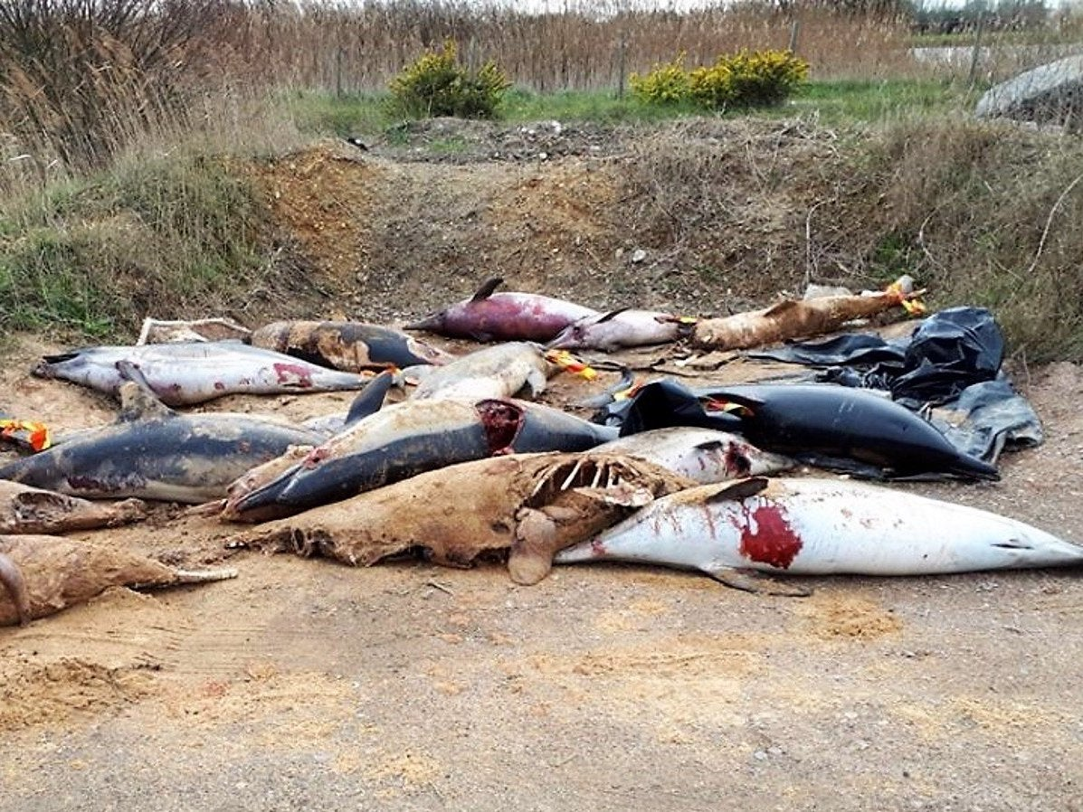 Hundreds of mutilated dolphins killed by nets discovered piled up on beach in France