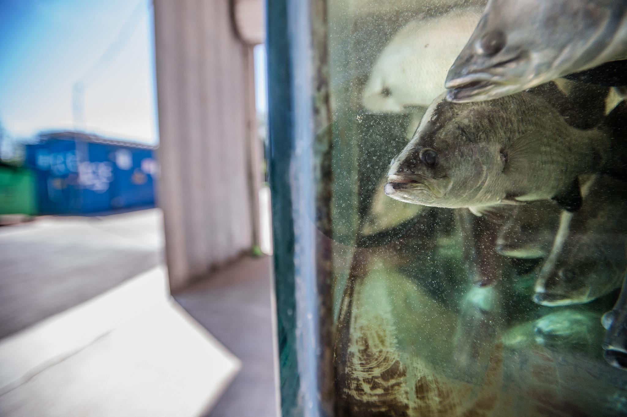 Salmon farms in UK 'at serious risk' after closures due to