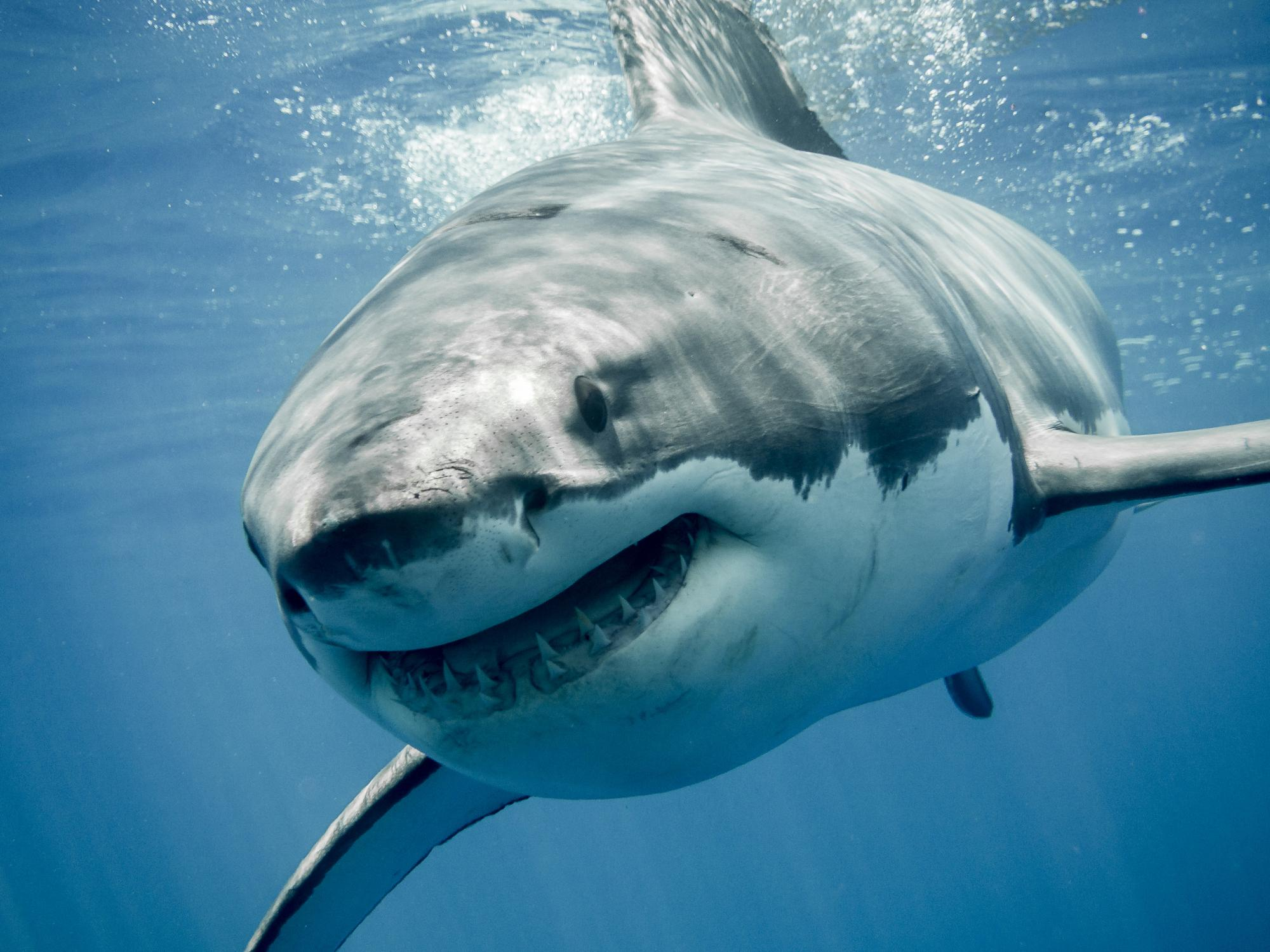 Sharks - latest news, breaking stories and comment - The