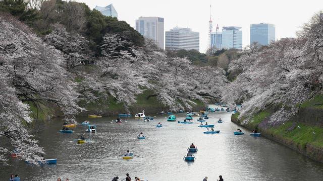 Blossom along Tokyo's Chidorigafuchi Moat