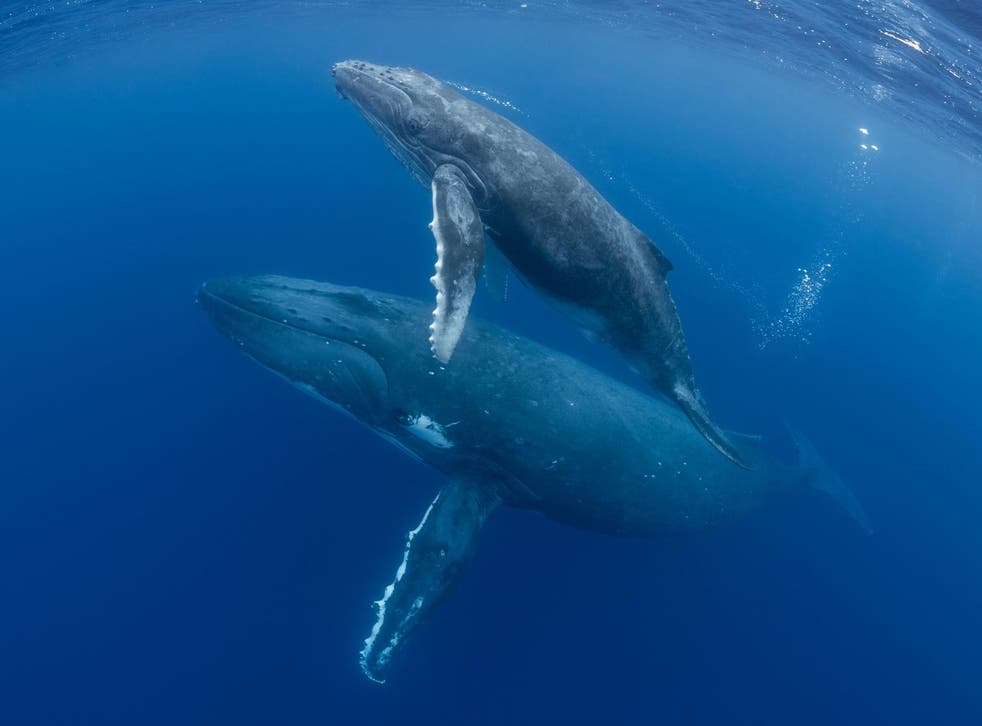 Scientists have laid out a strategy to protect nearly a third of the world's oceans