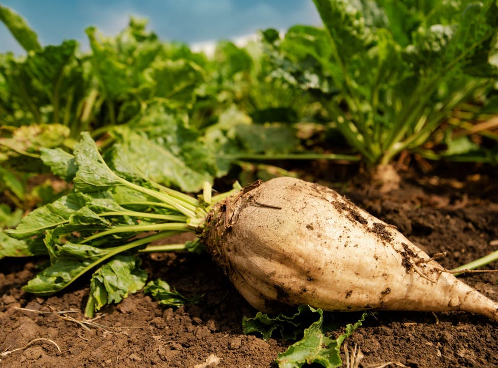 Marching to a different beet: campaigners say the crop is degrading topsoil