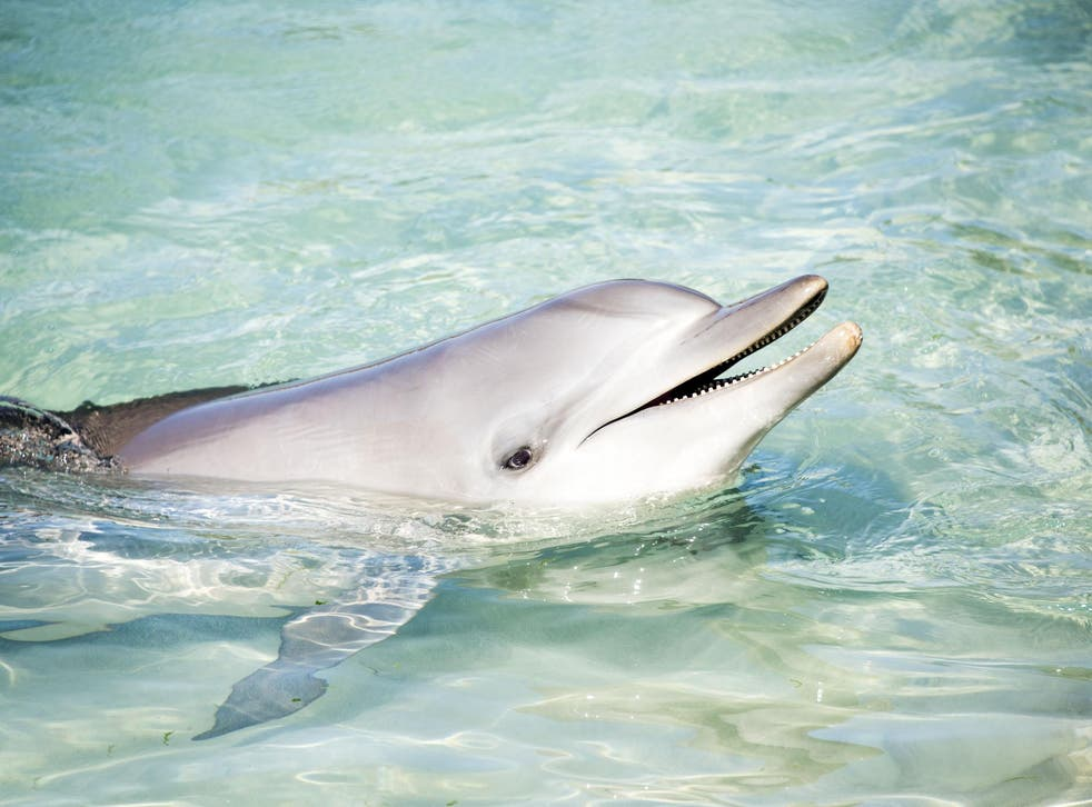 Scientists wanted to find out if female dolphins get any pleasure from sex