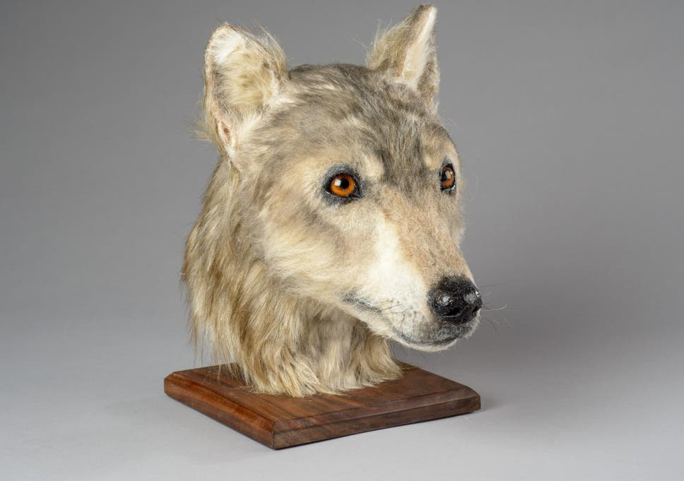 Face of 4,000-year-old Neolithic dog reconstructed for first time