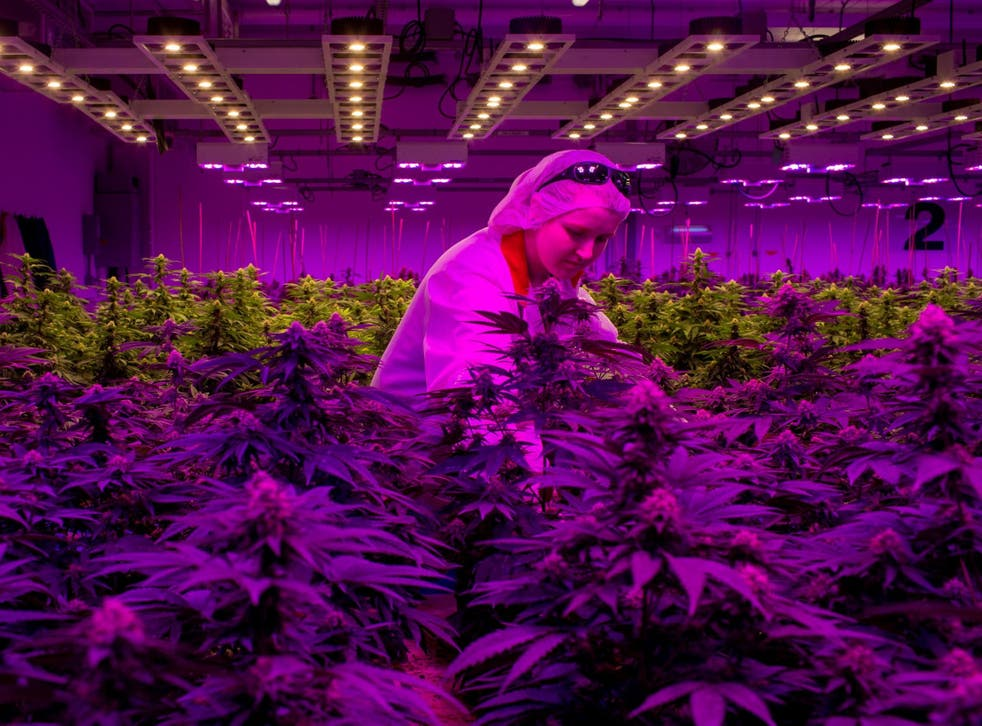 CBD levels should be regulated alongside THC in countries where cannabis is legal, like Canada (pictured)