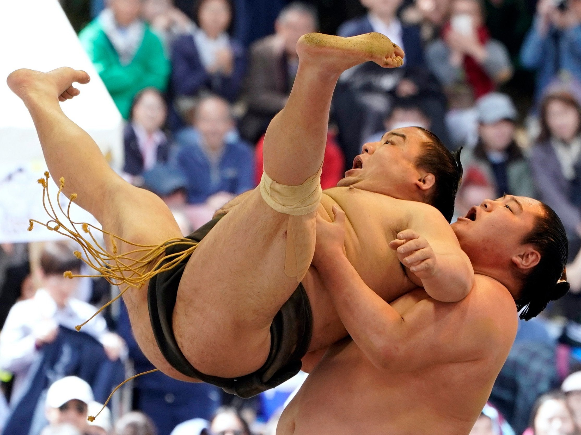 Trump 'could present trophy at sumo wrestling tournament in Japan'