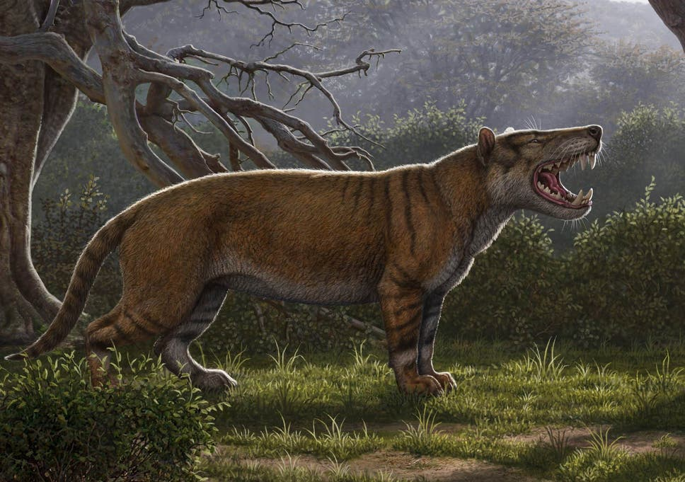 Fossils of massive 'lion' larger than a polar bear discovered in