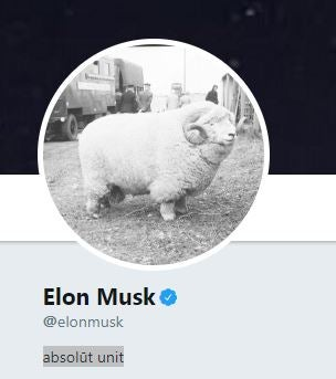 Elon Musk and the Museum of Rural Life engage in bizarre exchange