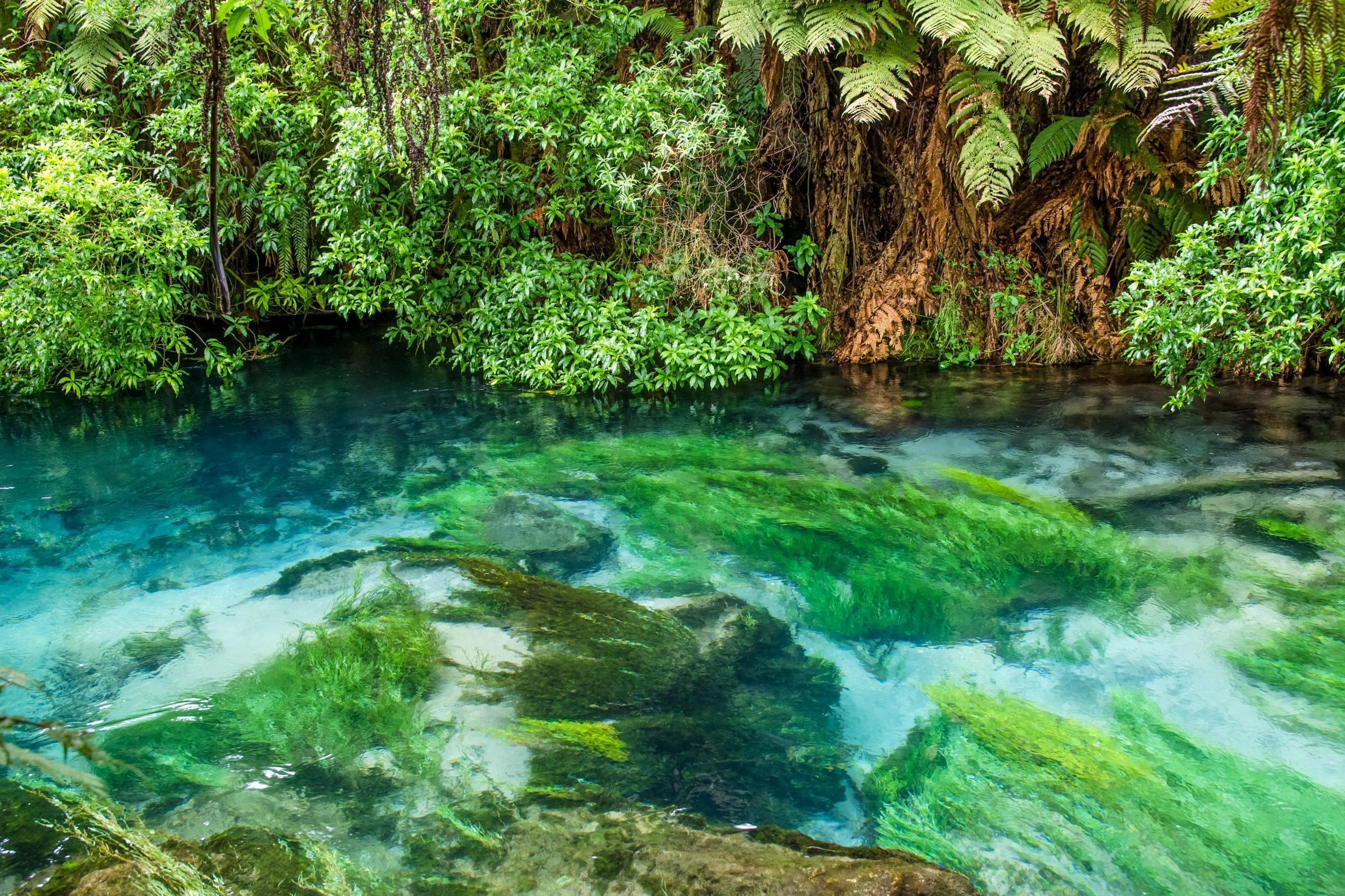 Instagram model criticised for allegedly swimming in New Zealand Blue Springs where visitors are banned