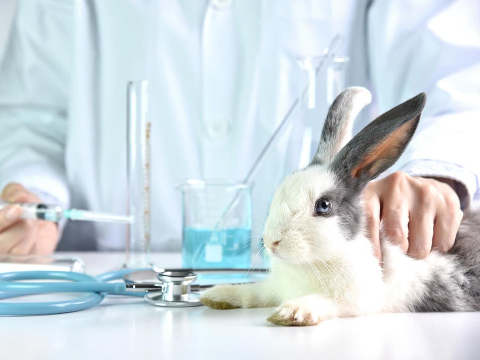 An estimated half a million animals are still used in tests for personal grooming products worldwide