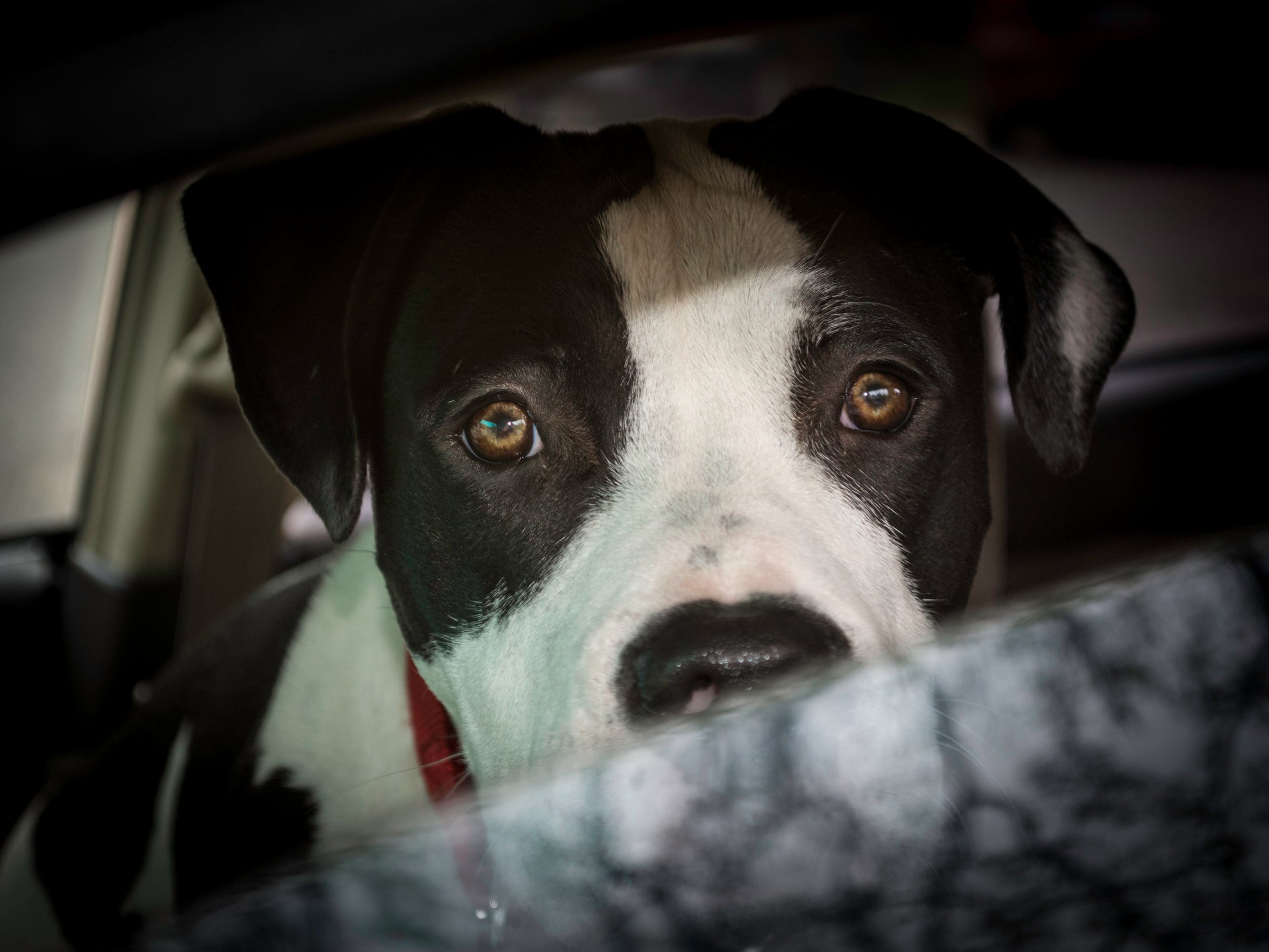 Spike in emergency calls for dogs left in hot cars during 'scorching' Easter bank holiday weekend