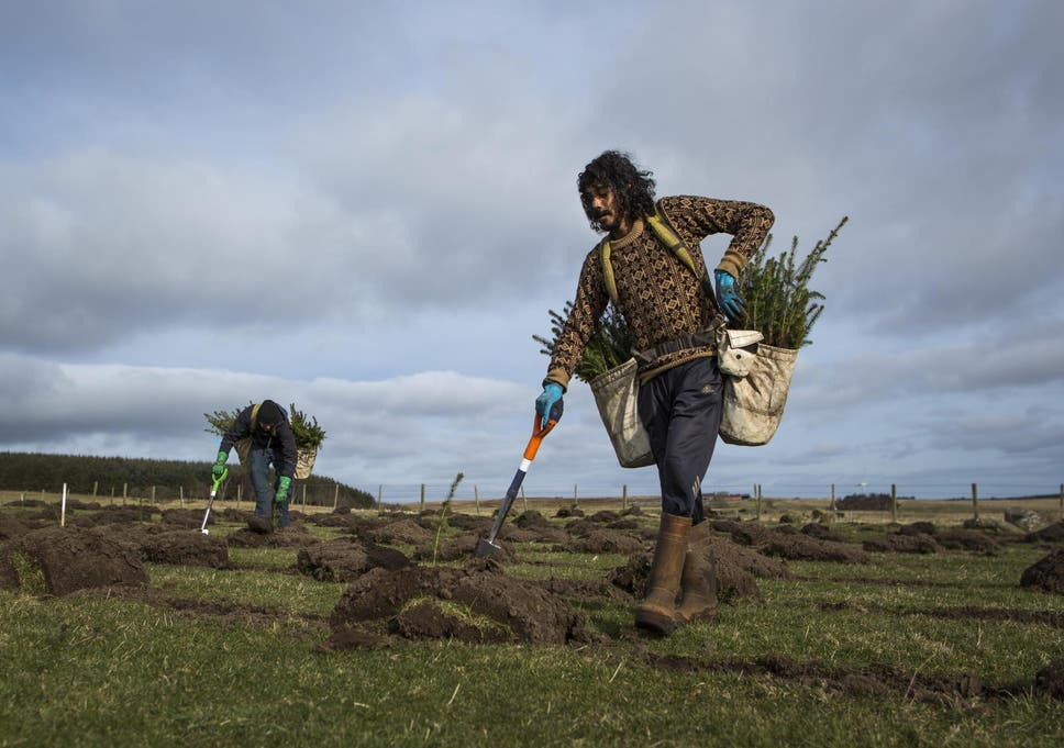 A huge tree-planting scheme, like this one in Northumberland, is recommended to help tackle greenhouse gases from farming