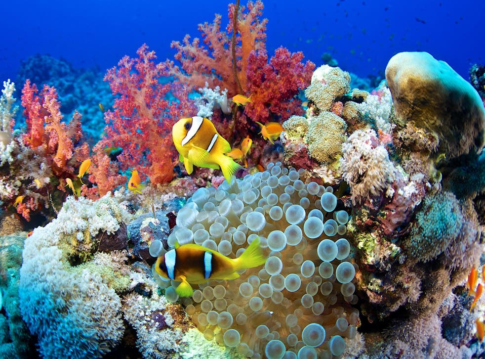 Coral reefs are the London, New York and Beijing of the underwater world, but life is slowly abandoning them