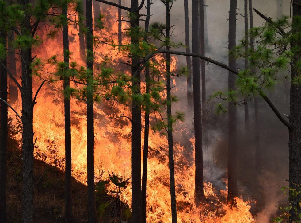 Rising global temperatures are causing ever more wildfires, which destroy forests and in turn exacerbate climate change