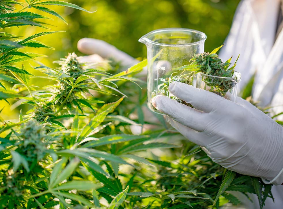 Perhaps fewer than 100 people have received medicinal cannabis treatment in the UK