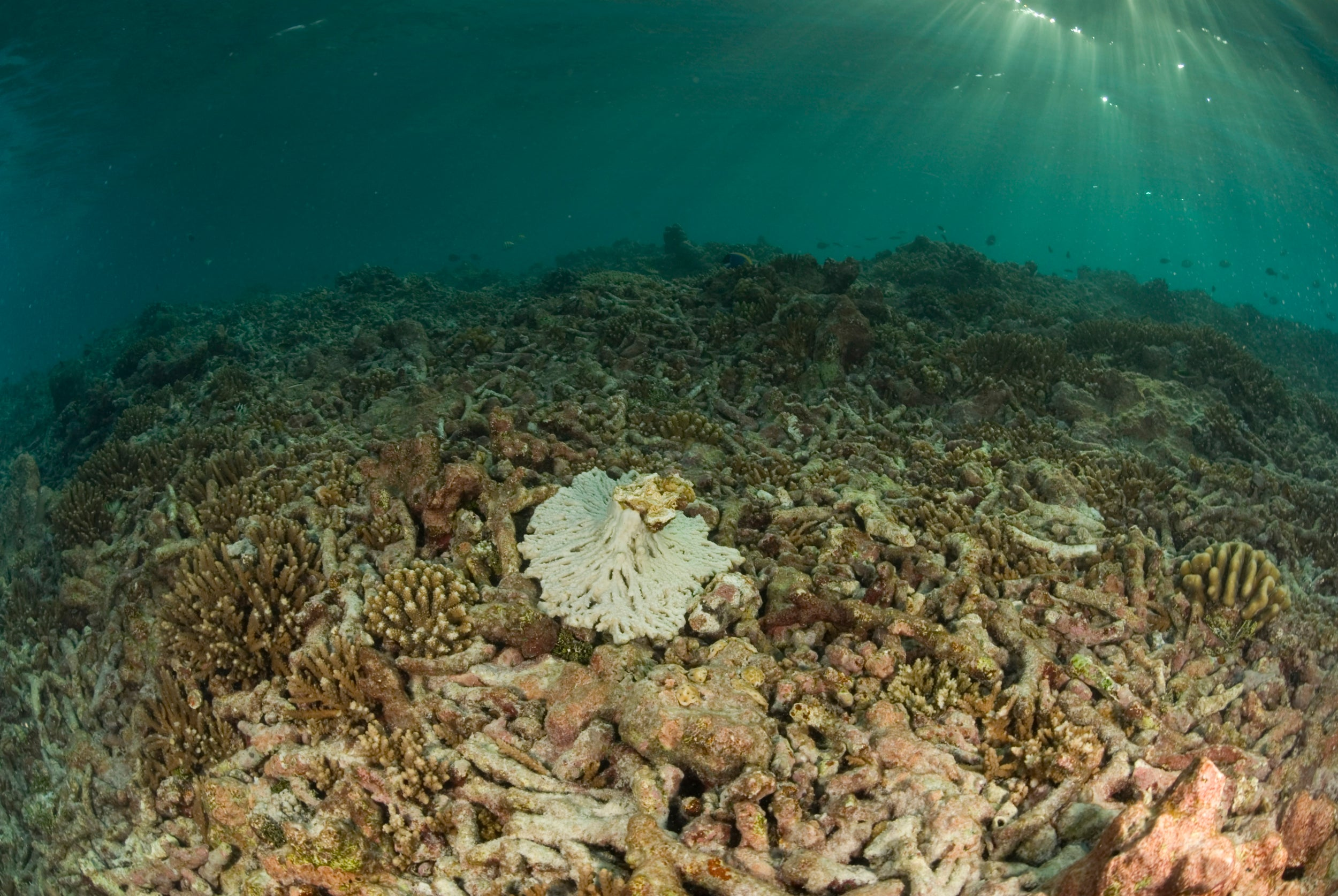 Coral reef in seychelles that has degraded