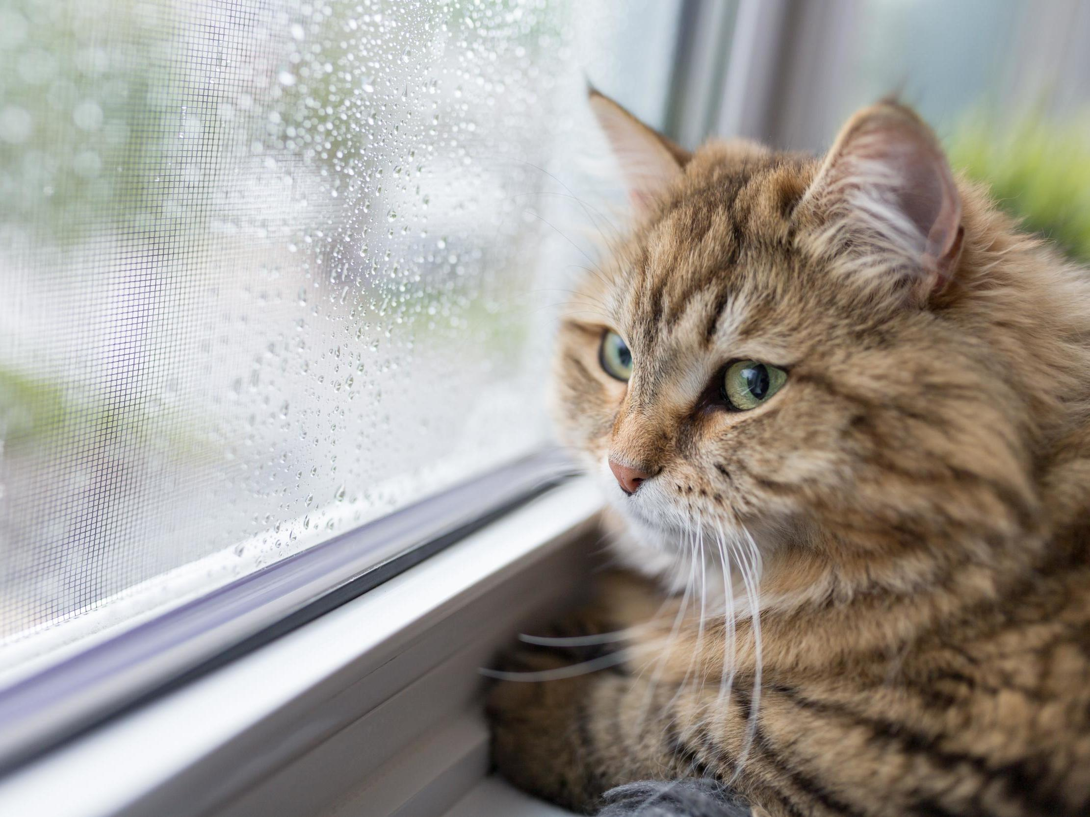 Cats could be banned from going outside under new Australian law
