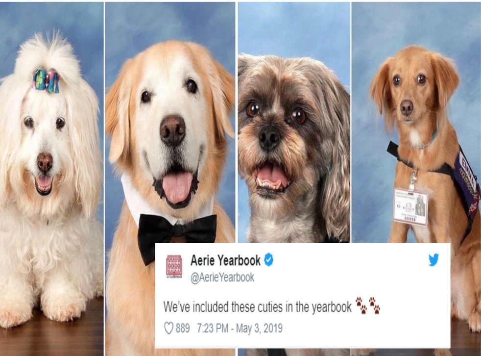 Parkland therapy dogs featured in school yearbook (Twitter / Aerie Yearbook)