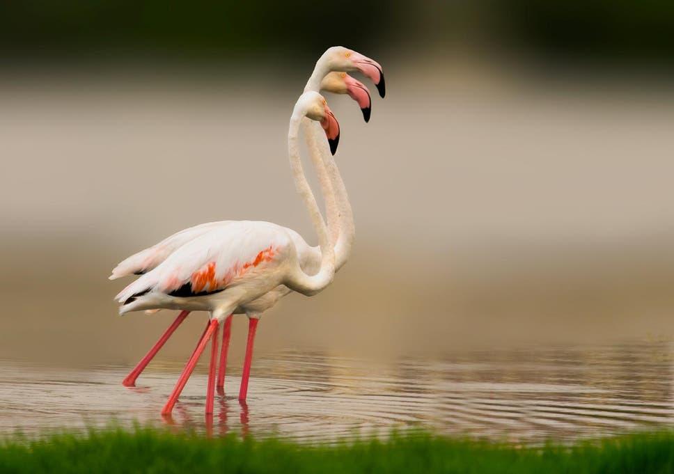 neue Produkte für einzigartiger Stil hohes Ansehen Flamingo euthanised by zoo after child throws rock at it ...