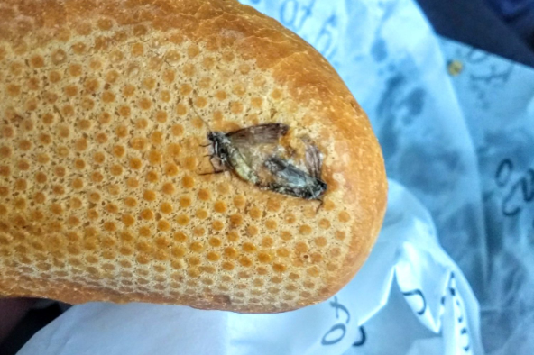 Passenger finds insects embedded in 'disgusting' breakfast roll at Dublin Airport