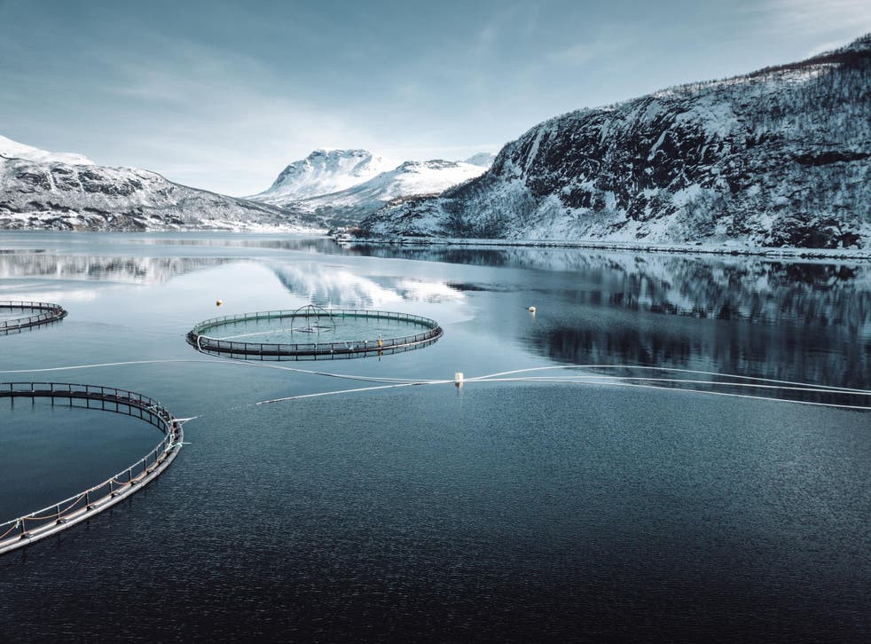 Norway exports over a million tonnes of farmed salmon every year