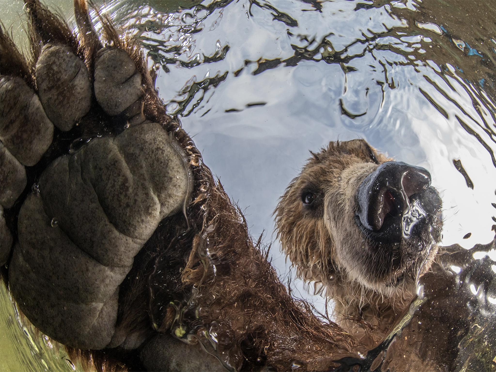 Fishing brown bear picture among winners of nature photography contest
