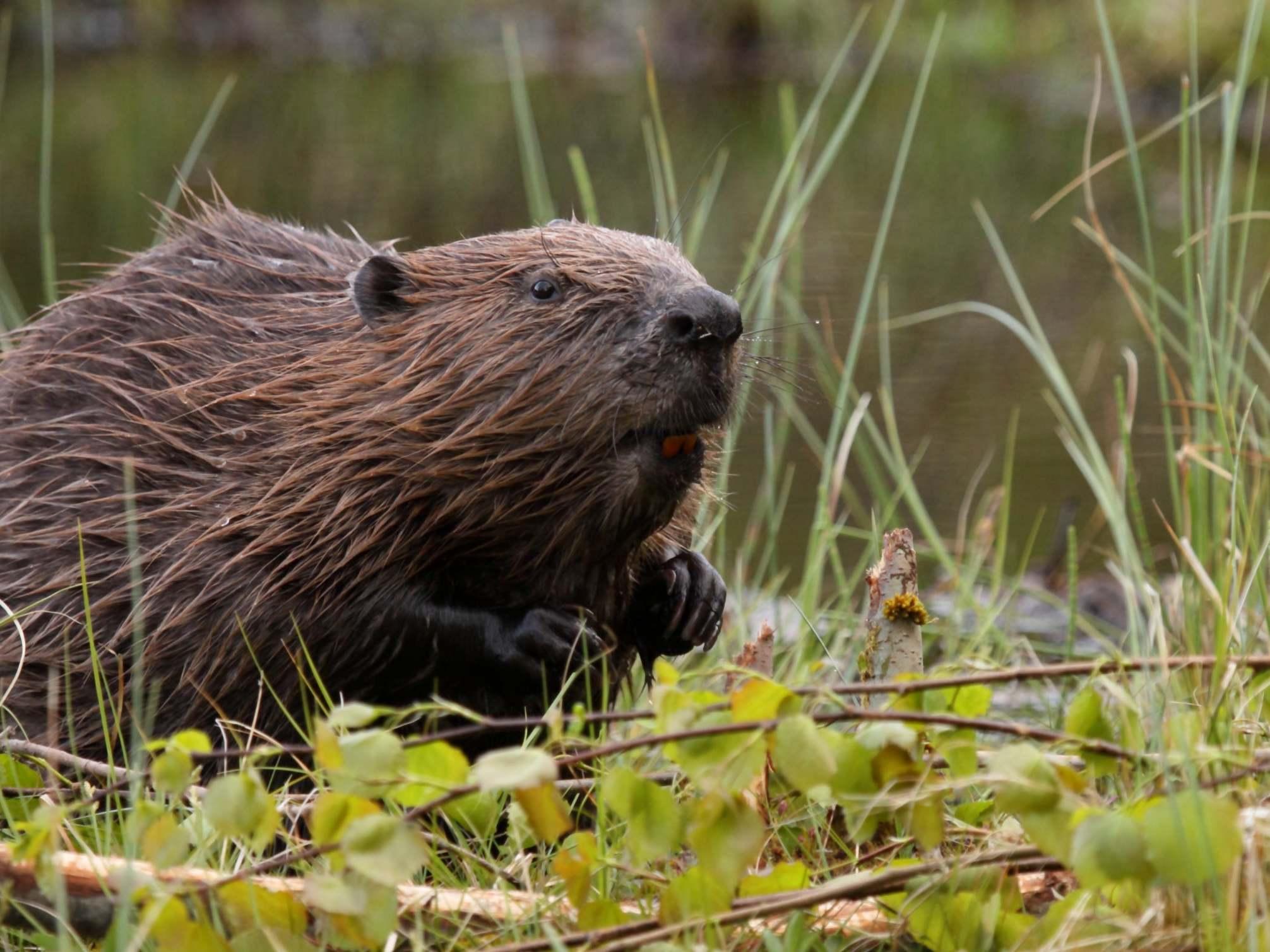 MPs to debate returning huge swathes of Britain to natural habitat in 'rewilding' scheme