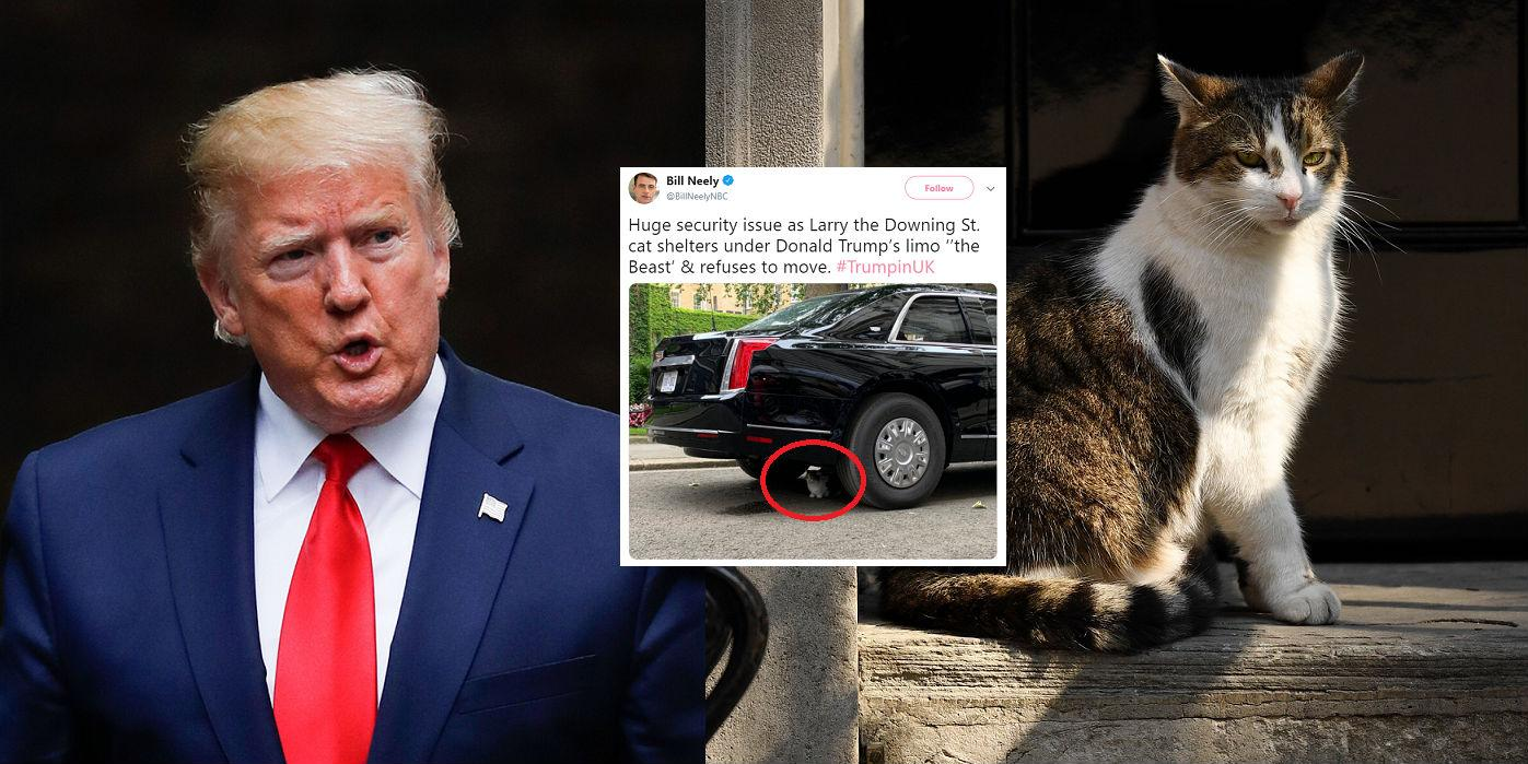 Trump protest: People think Theresa May's cat Larry has ...