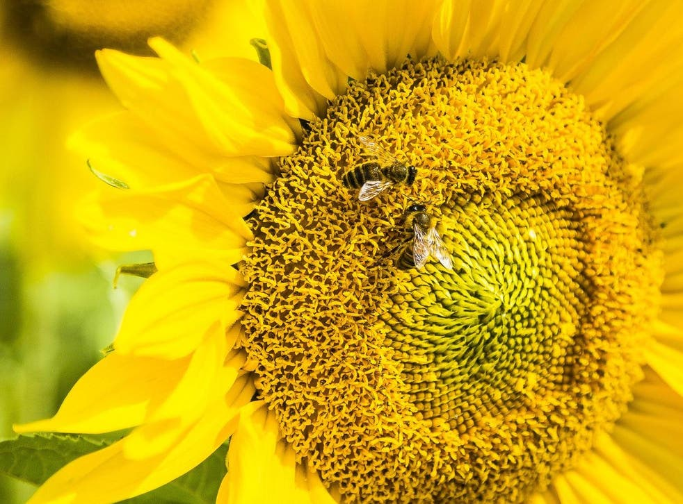 Bees could recognise that 'two' could represent two bananas, two trees or two hats