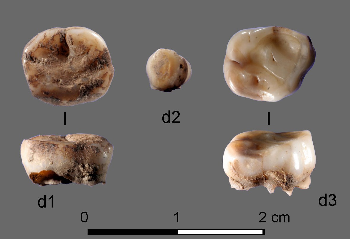 DNA from 31,000-year-old milk teeth leads to discovery of new Ice Age population of big game hunters