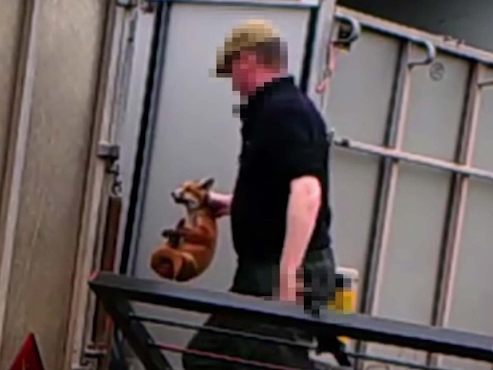 Fox hunter who fed live fox cubs to his dogs avoids ban on keeping animals and spared jail