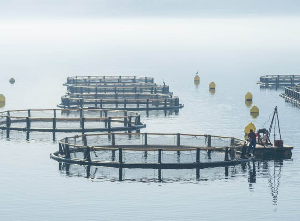 Net pens in the sea: the industry has come under fire over the welfare of the fish