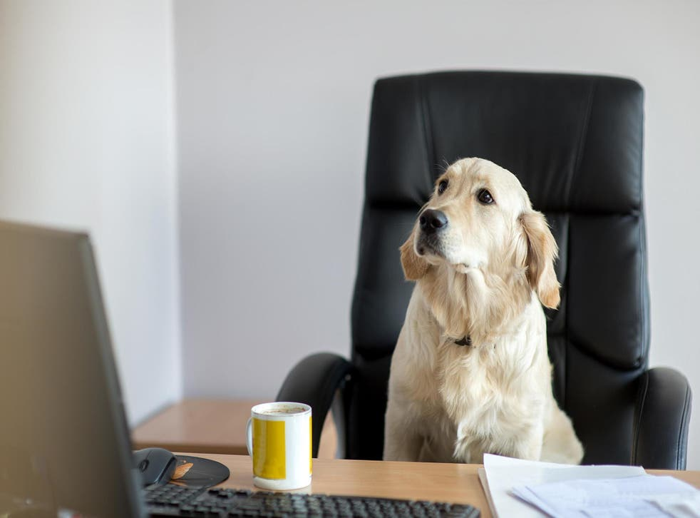 Bring Your Dog To Work Day is next week (Stock)