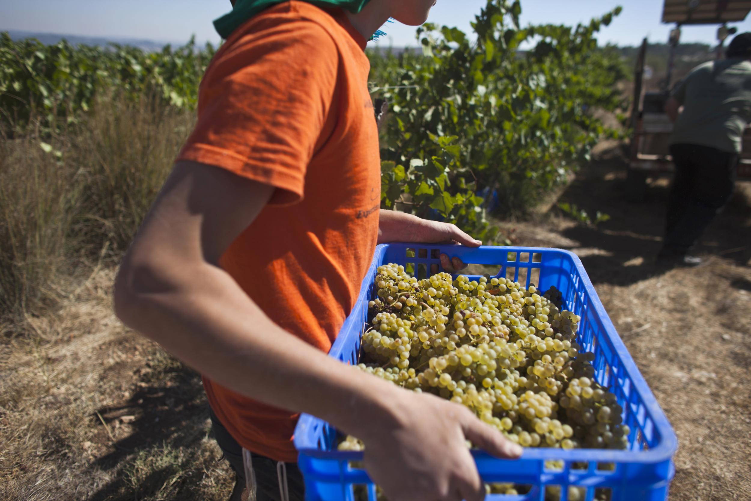 An EU decision over wine could have a big impact on the Israel-Palestinian conflict