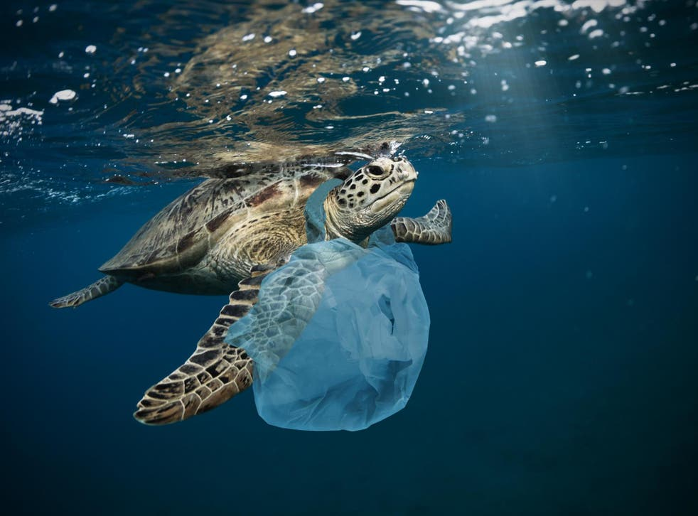 Hundreds of thousands of animals die every year from eating and getting tangled in plastic waste