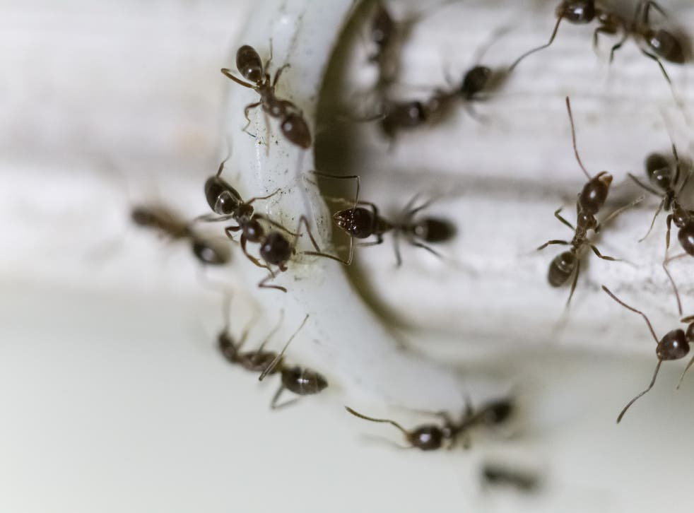 The ants were first spotted before take-off