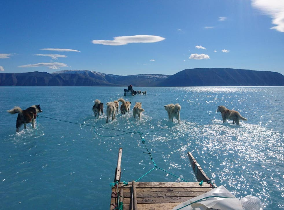 Huskies pull scientists through waters standing on a 1.2m-thick ice sheet in Inglefield Bredning in north west Greenland