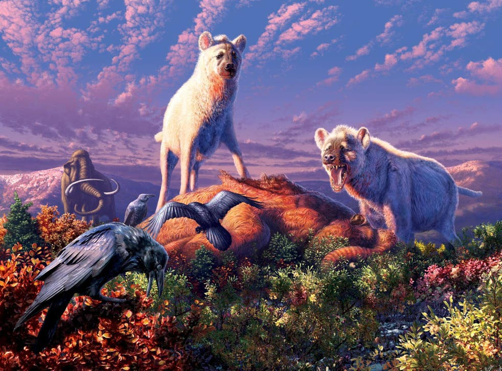 The 'running hyenas' (artist's impression) would have lived alongside woolly mammoths and saber-toothed cats