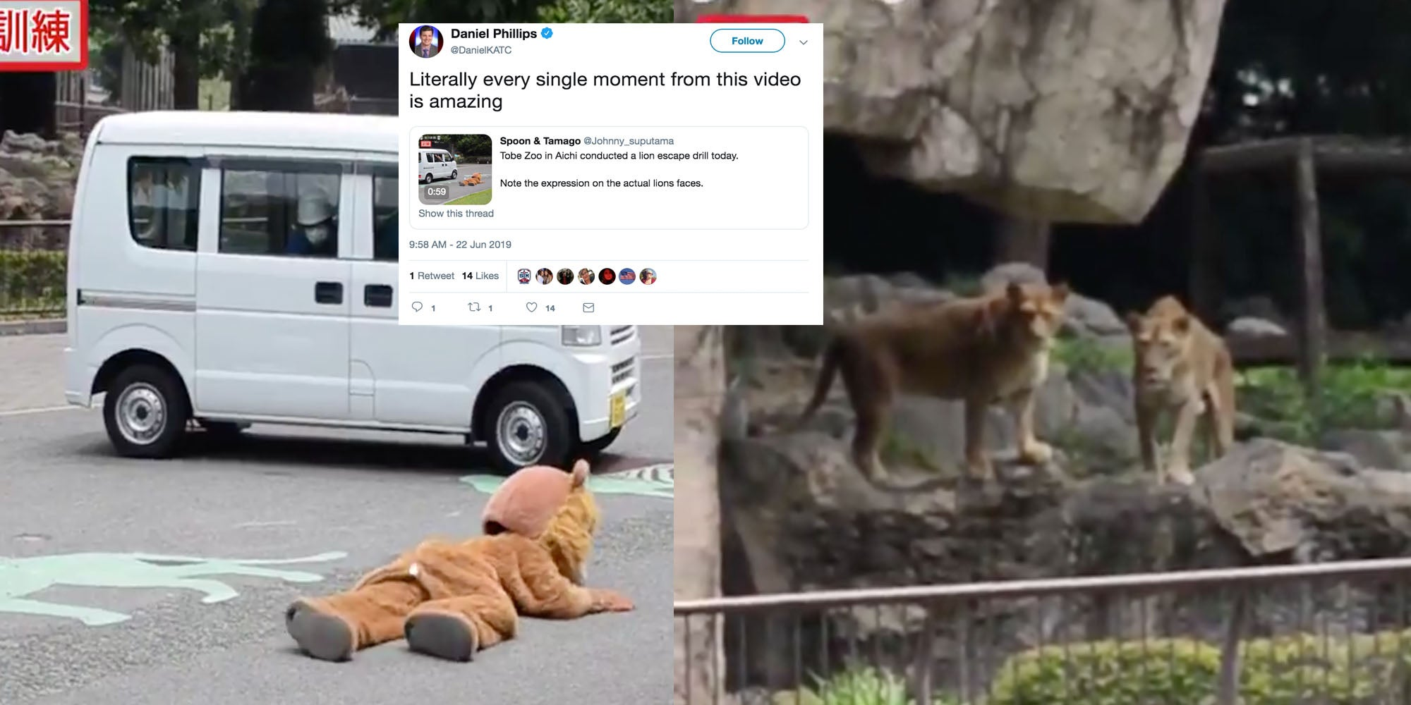 Japan zoo uses man in furry suit during 'escaped lion drill'