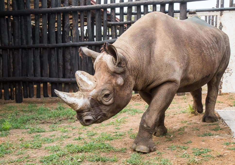 rhino networks coupon code